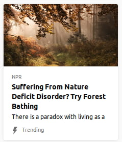 By NPR. Stock photo o' forest.