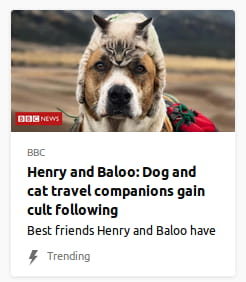By BBC. Photo o' a dog with a cat on its head like a hat.